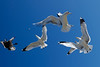Want some cheap fun? Throw bread crumbs for seagulls and photograph the aerial scrambles.