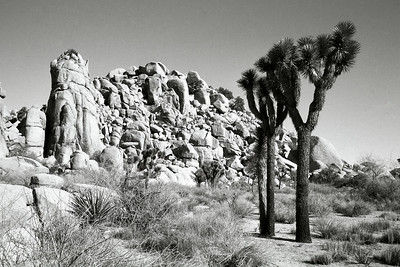 It's easy to see why Joshua Tree is used for low budget science fiction movie sets.