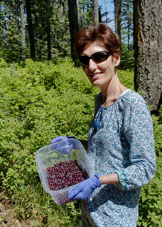 Here are your huckleberries. Mali with her huckleberry haul. Mali spent a few hours picking huckleberries in the forest near Fernan Lake. I picked berries as well but like most forest creatures I ate them on the spot.