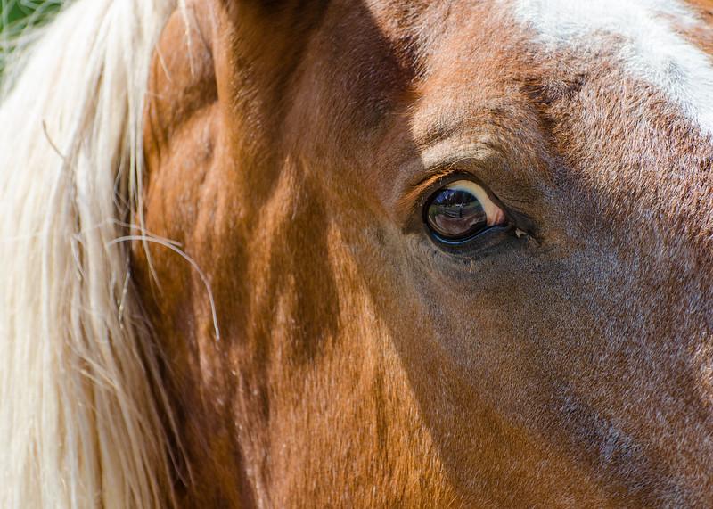 I love the naturally suspicious horse side eye gaze.