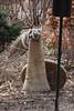 2011 03 025 IMG_9573 tele