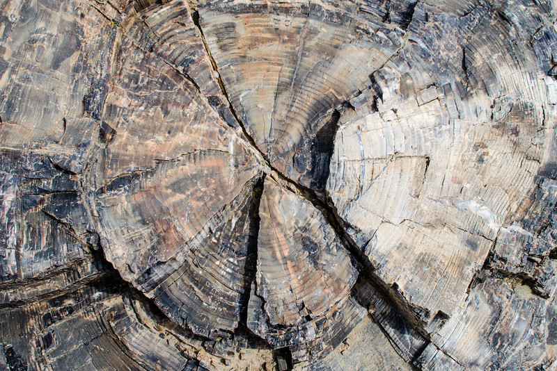 """We spotted a number of petrified wood stumps on the trail. They were all upright and looked like they had been logged close to the roots. The """"loggers"""" were volcanic mud and ash flows that sheared off the tops of the trees and buried what was left to be petrified. I have always loved the colors in petrified stone. It didn't occur to me to wet this stump to bring out the colors."""