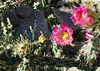 """Cactus bloom: beauty and attitude. """"You want a piece of me; it's going to hurt!"""""""