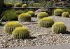 Desert Garden, Phoenix, AZ