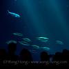 At Monterey's Wonderful Aquarium.