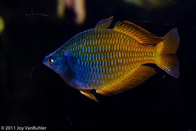 Fish at Shedd Aquarium