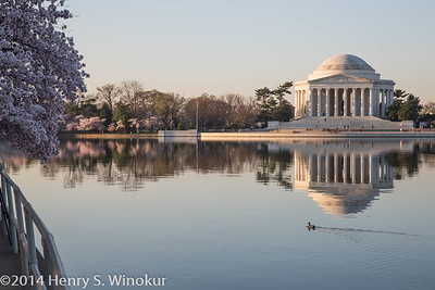 Jefferson Memorial...and a duck