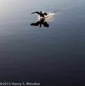 Taking off... or landing?
