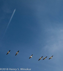 Flying.......