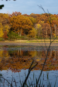 Fall Colors at Kensington Metropark