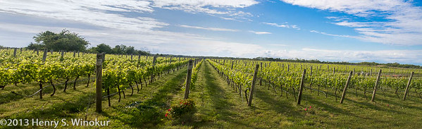 Vineyards on Long Island