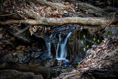 """On a visit to Riverbend Park in McLean, a very small waterfall.  I doubt it was more than 12"""" high.  April 6, 2021  ©2021 Henry S. Winokur"""