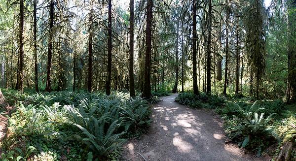 Rain Forest Pano