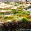 Mud Volcano area. Yellowstone National Park, WY