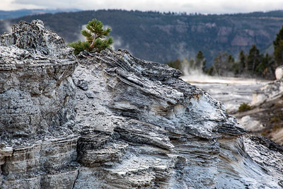 A feature at the top of Mammoth Hot Springs.  ©2019 Henry S. Winokur