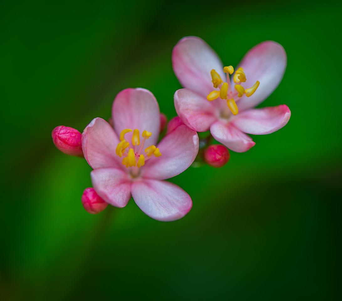 USF Botanical Gardens - Tampa, Florida