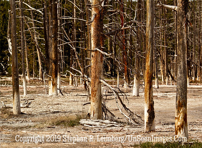 Sox Trees JPG 20110618_Yellowstone - June 2011_7035