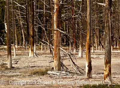Sox Trees JPG 20110618_Yellowstone - June 2011_7035