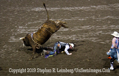 Bull minus Rider JPG 20110619_Rodeo - Cody - June 2011_8237