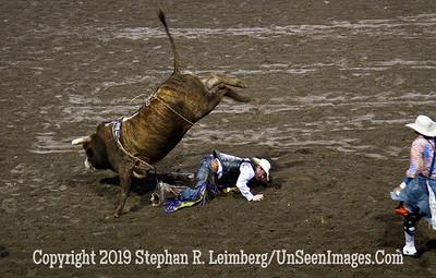Bull minus Rider JPG 20110619_Rodeo - Cody - June 2011_8237