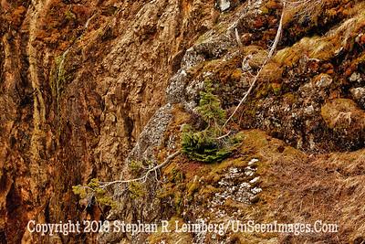 Fallen Branch HDR JPG 20110618_Yellowstone - June 2011_7048