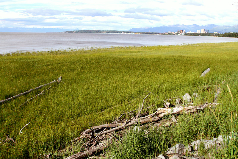 Anchorage and drift wood.