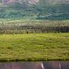 Roadside scenery just outside of Denali National Park.