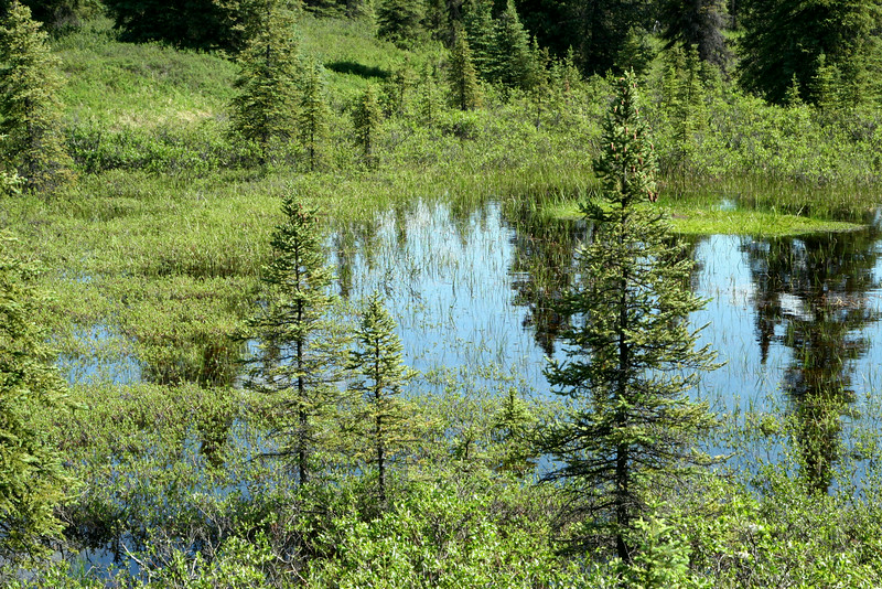 A pond near Wonder Lake - Denali National Park.