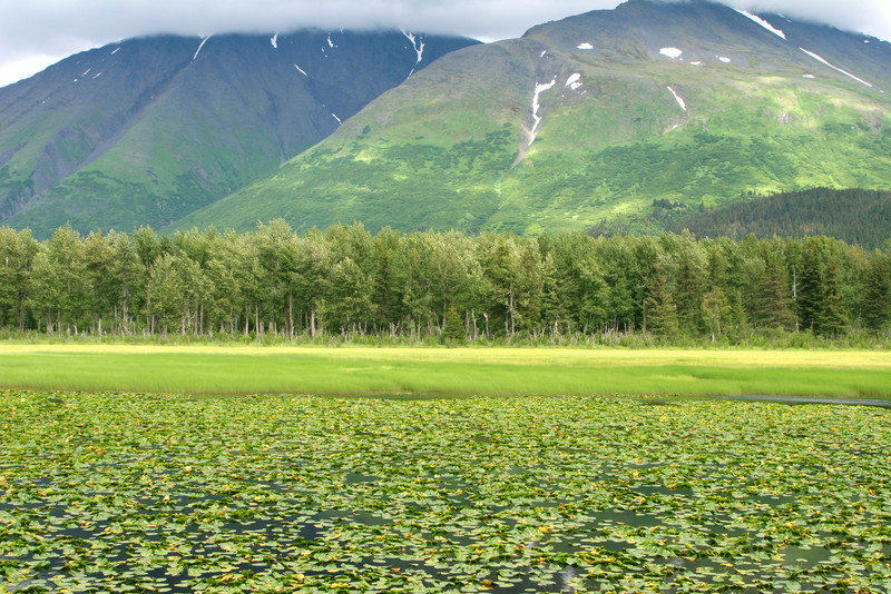 Mountains and lily pads on the Seward Highway