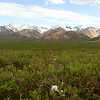 Hiking in Polychrome Pass - Denali. It took a few water crossings to get to this point.