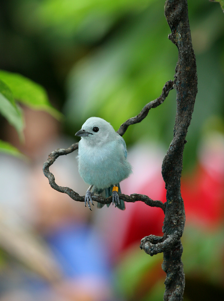 Bird - National Aquarium - Baltimore, Maryland