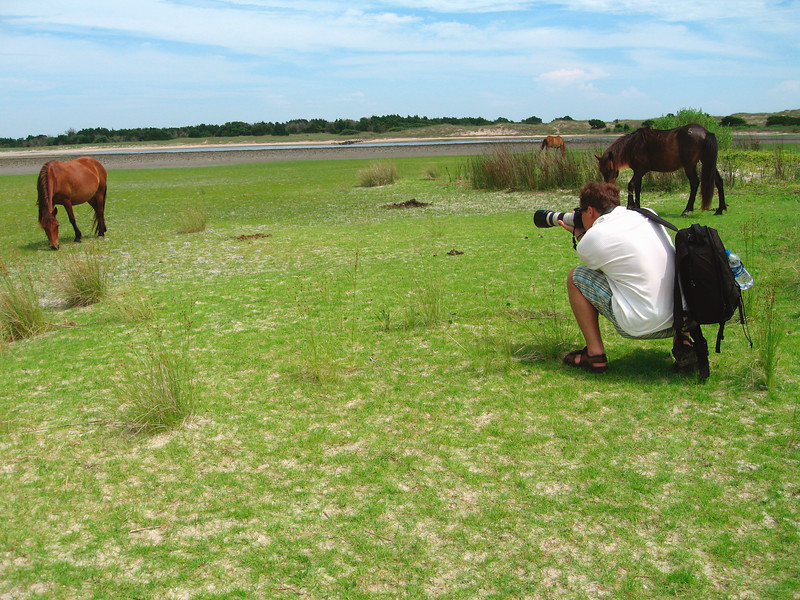 The owner of this site photographing wild horses on Shackleford Banks