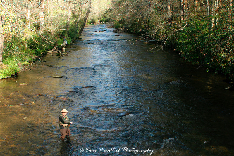 Trout fishing in the Davidson River - Pisgah National Forest