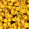 Rubber ducks at the North Carolina State Fair - Raleigh