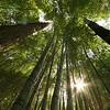 Bamboo Forest at Duke Gardens - Durham