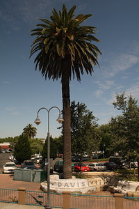 Palms in California