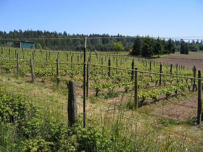 Bainbridge Island Winery's vineyard off of Day Road