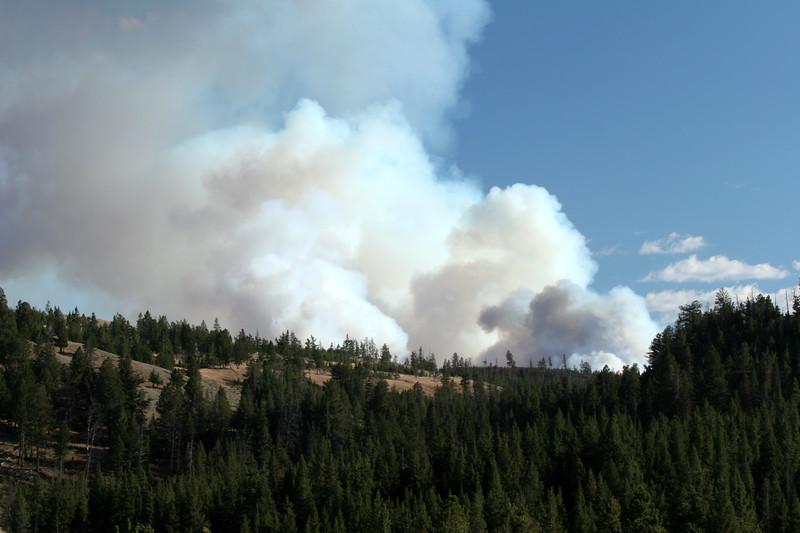 Forest Fire near Mt. Washburn