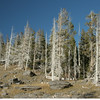 Trees around the basins often are turned a ghostly white by the chemicals from the geysers.