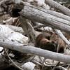 Dozing otters - Madison River