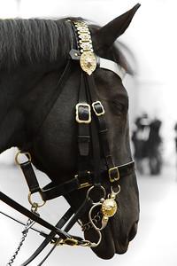 A Royal Horse