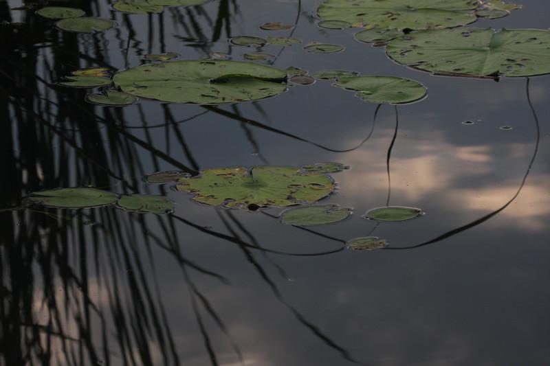 Pokegama Reflections