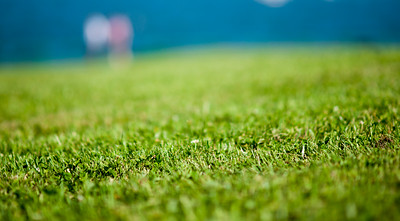 lawn, shallow DOF, Zeiss 1.4/85mm