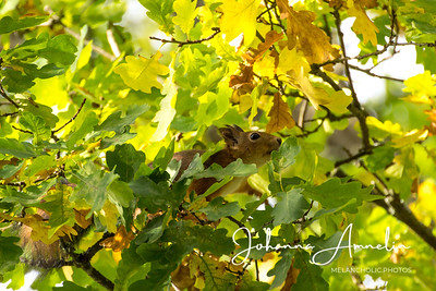 Salo Uskelan kirkko oravat syksy 054