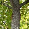 Salo Uskelan kirkko oravat syksy 015