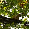Salo Uskelan kirkko oravat syksy 047