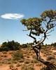 ut_cloud_tree_p