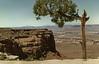 tree_rock_utah_p