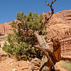 along the Park Avenue trail<br /> <br /> Arches National Park, Utah<br /> April 2009