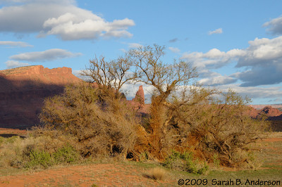 Fisher Tower through   near Moab, Utah April 2009